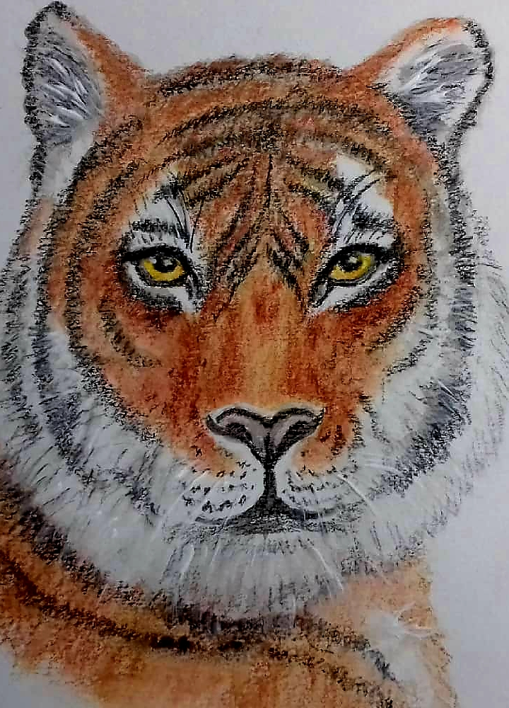Tiger Aquarell
